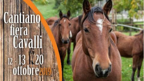 siti di incontri equestri UK quanto tempo si deve aspettare prima di uscire dopo la separazione